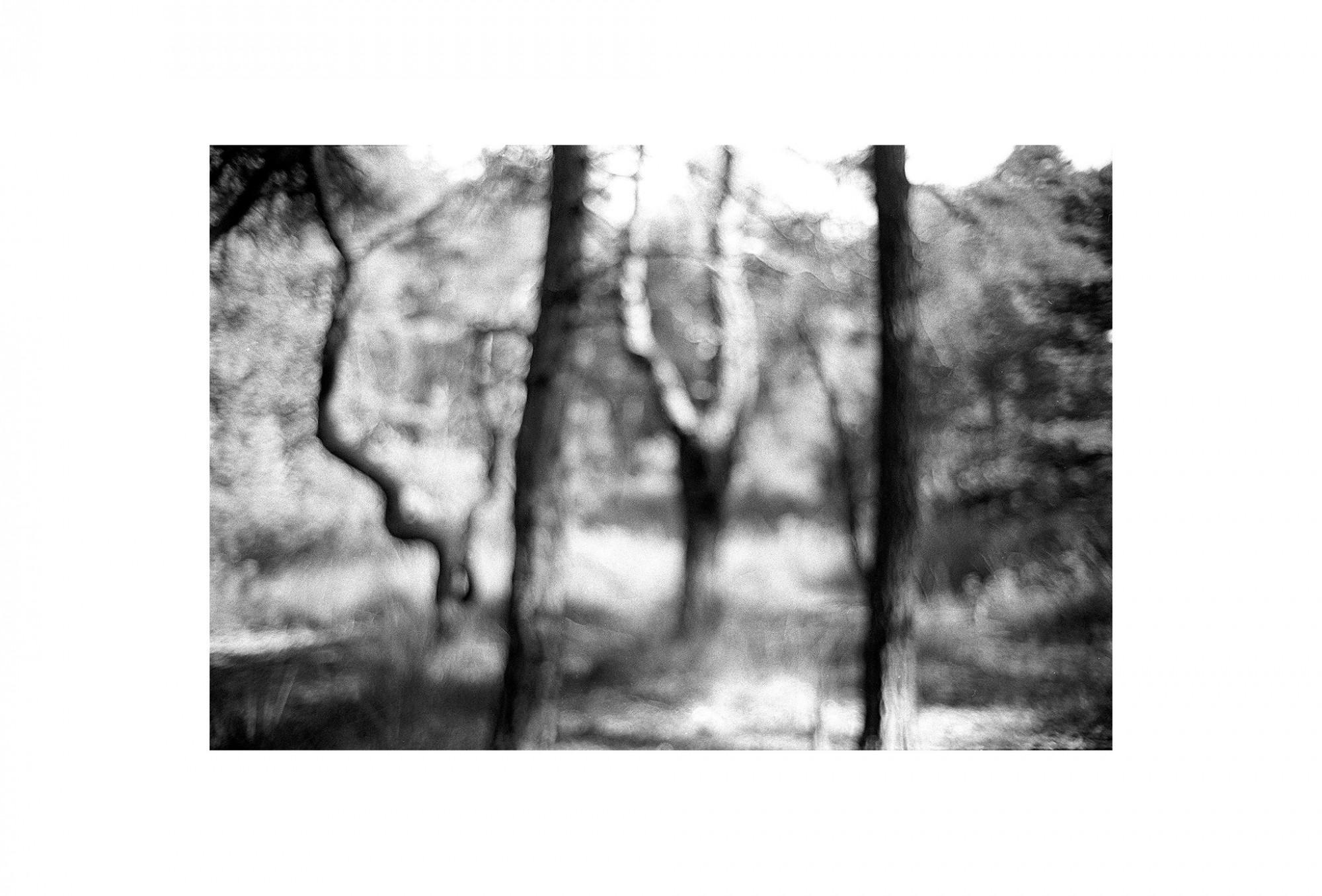 Afbeelding: Uit de reeks: Bomen en het licht daarom heen. - nr. 96-43-36, fotokunst Dominique Van Huffel.