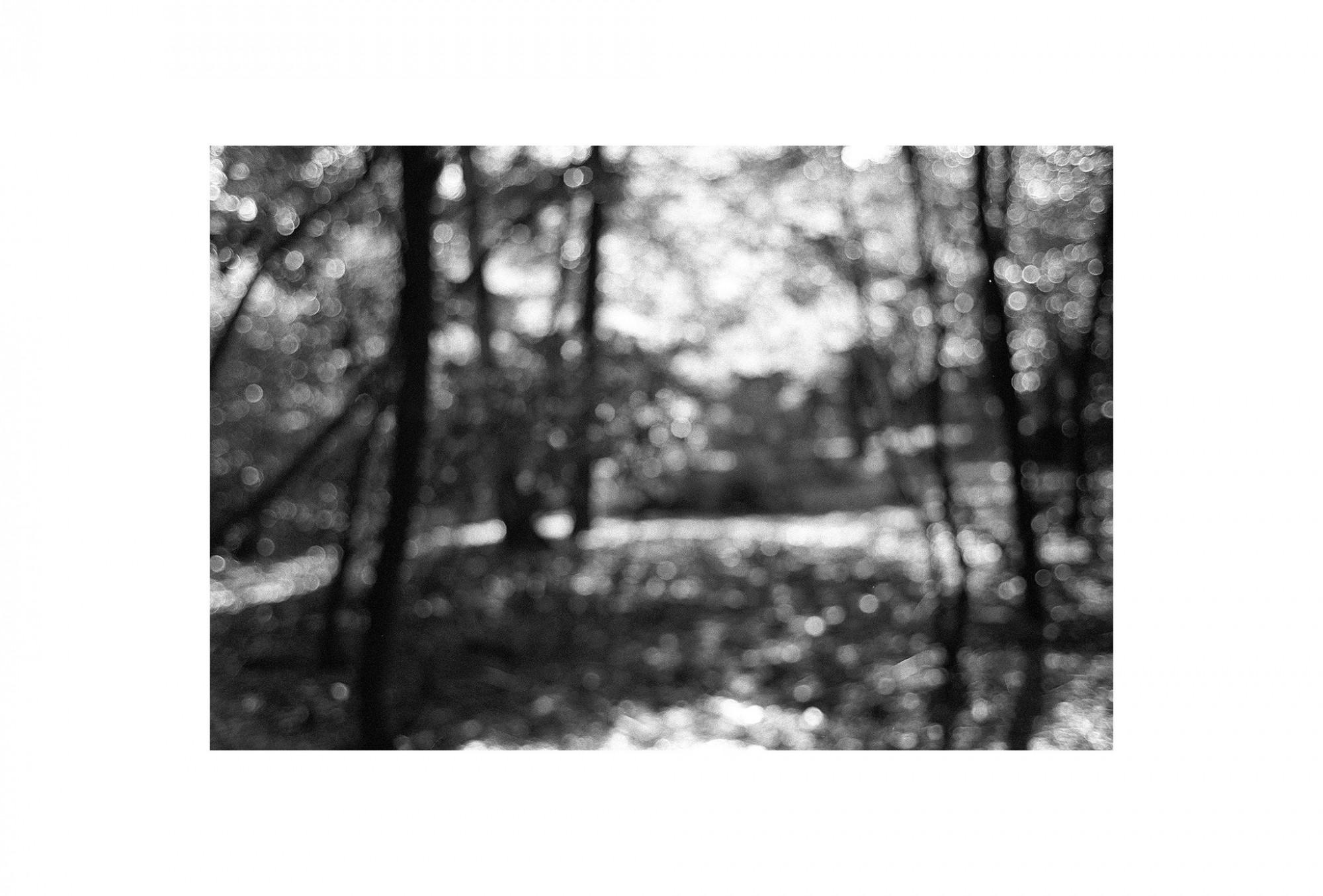 Afbeelding: Uit de reeks: Bomen en het licht daarom heen. - nr. 96-48-16, fotokunst Dominique Van Huffel.