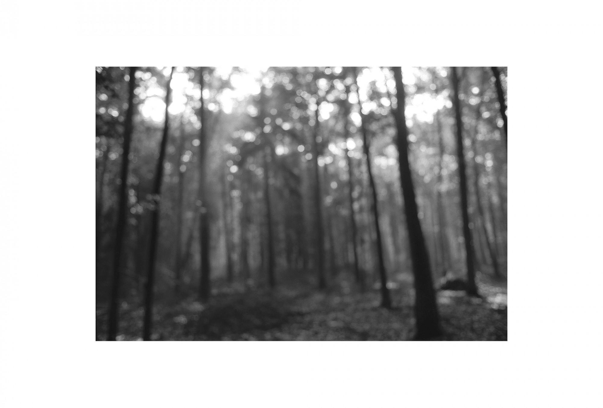 Afbeelding: Uit de reeks: Bomen en het licht daarom heen. - nr. 96-44-16, fotokunst Dominique Van Huffel.