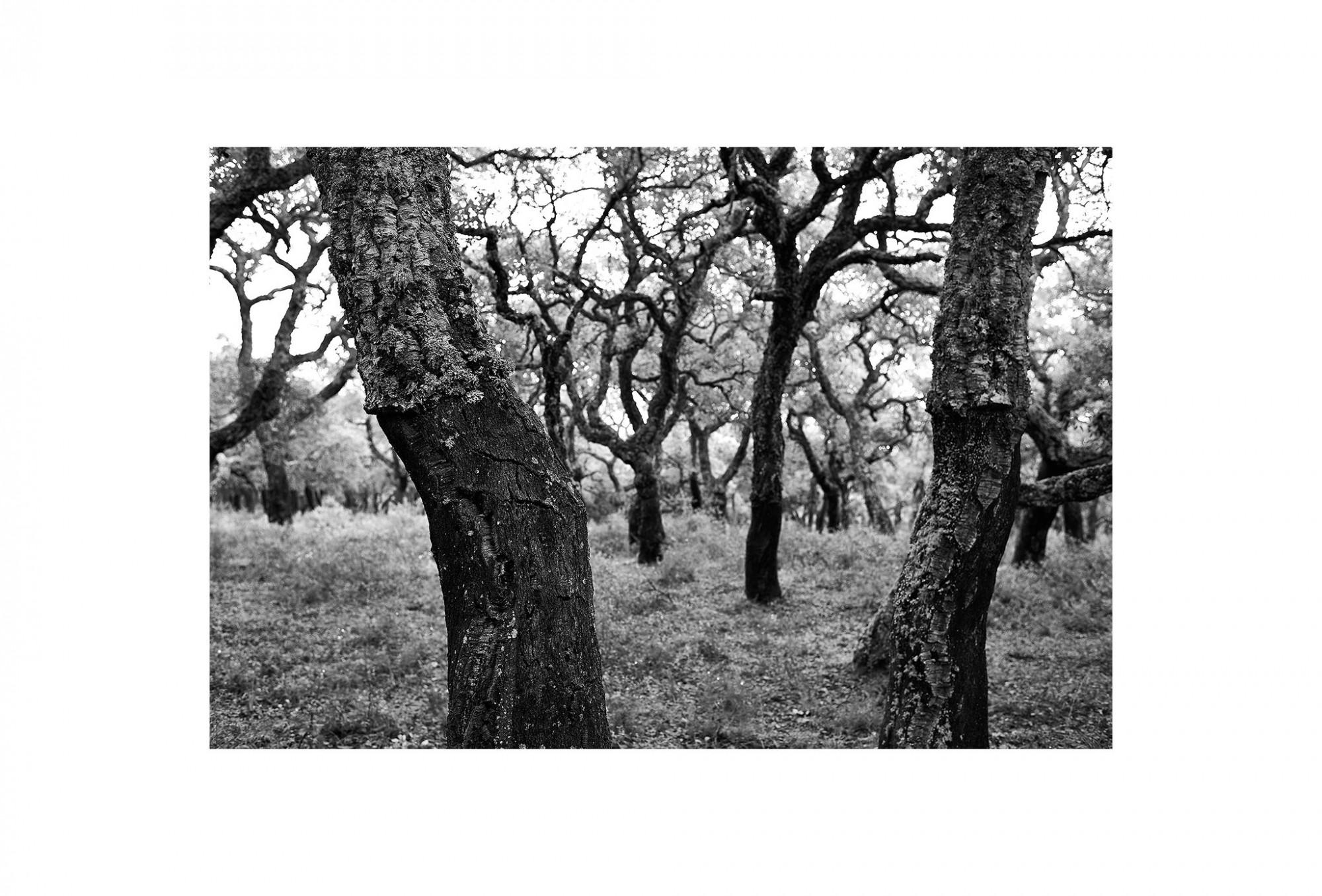Afbeelding: © Dominique Van Huffel landscape Spain, foto kunst zwart wit, landschapsfotografie.