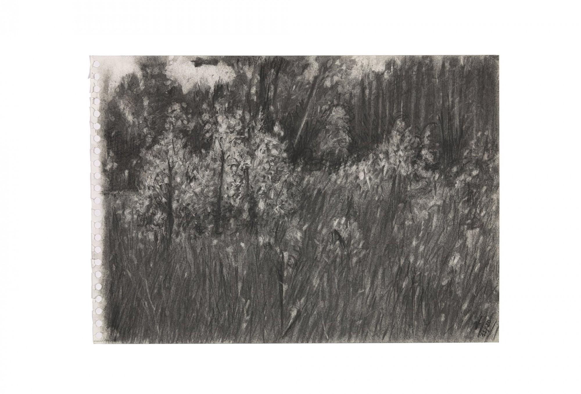 Afbeelding: Houtskooltekening H11_11_2020 - jonge berken in herfst licht  - Wortel Kolonie