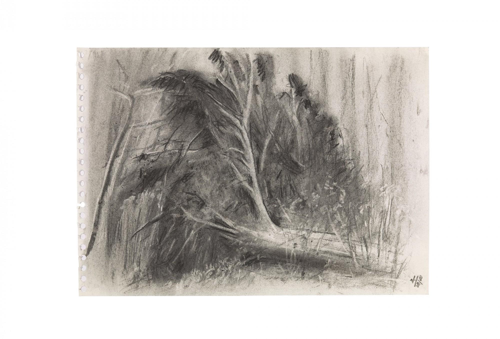 Afbeelding: Houtskooltekening H13_08_2020 - niet alle bomen sterven staand - Minderhout - Halsche Beemden