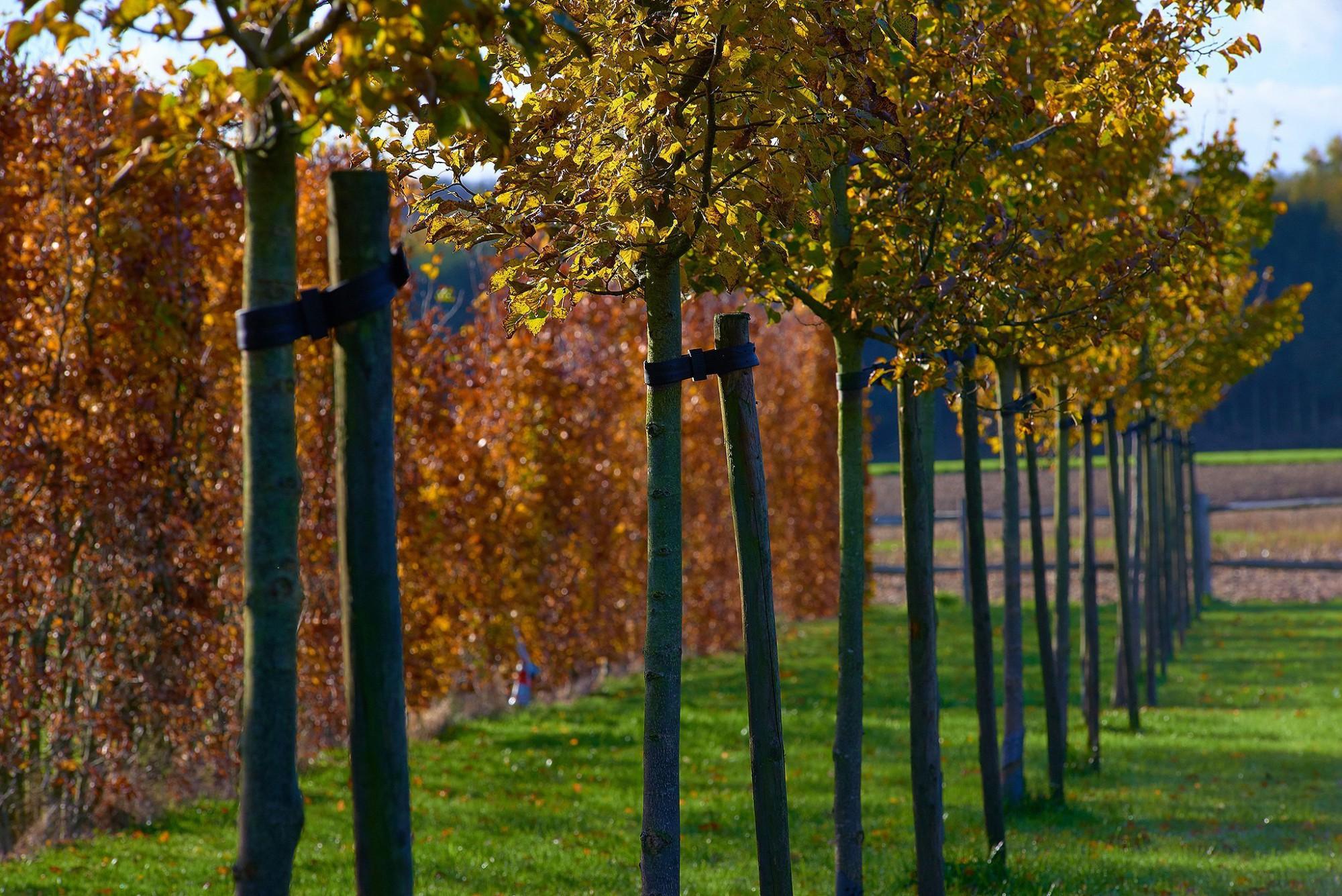 Afbeelding: Fotografie tuin te Mazenzele voor © Duo Verde.