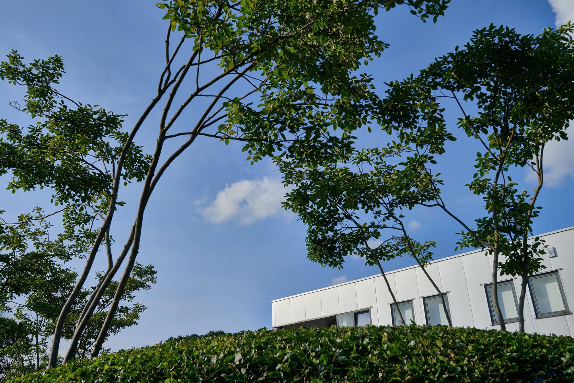 Afbeelding: Fotografie tuinarchitectuur voor © Duo Verde, foto Van Huffel.
