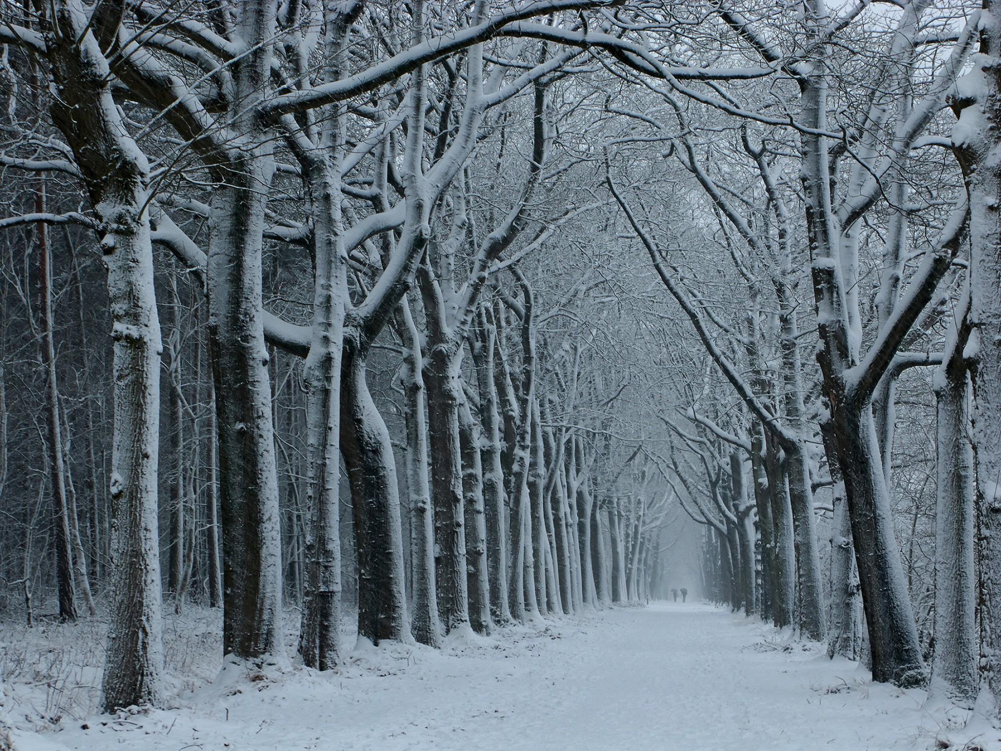 Afbeelding: Landschapsfotografie Torendreef te Wortel, Foto Van Huffel.