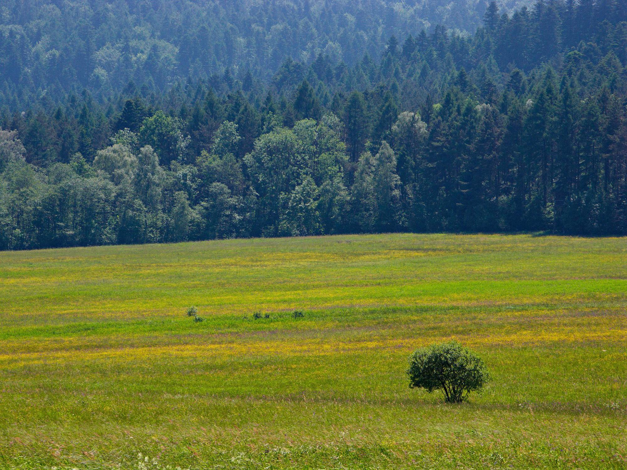 Afbeelding: Polen, Nationaal Park Bieszczady, fotografie Dominique Van Huffel.