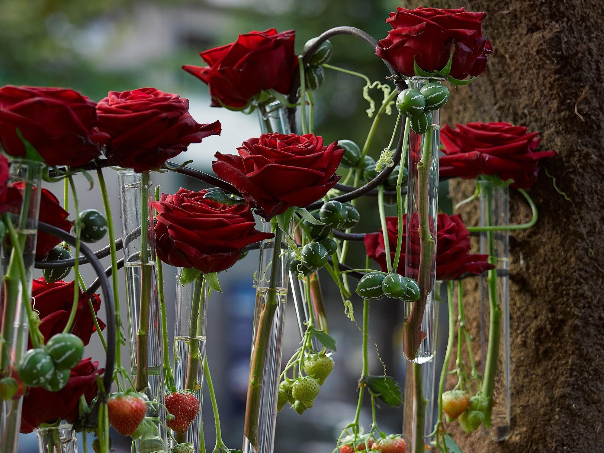 Afbeelding: Fotografie van speciale eventen, bloemen en groenten Hoogstraten.