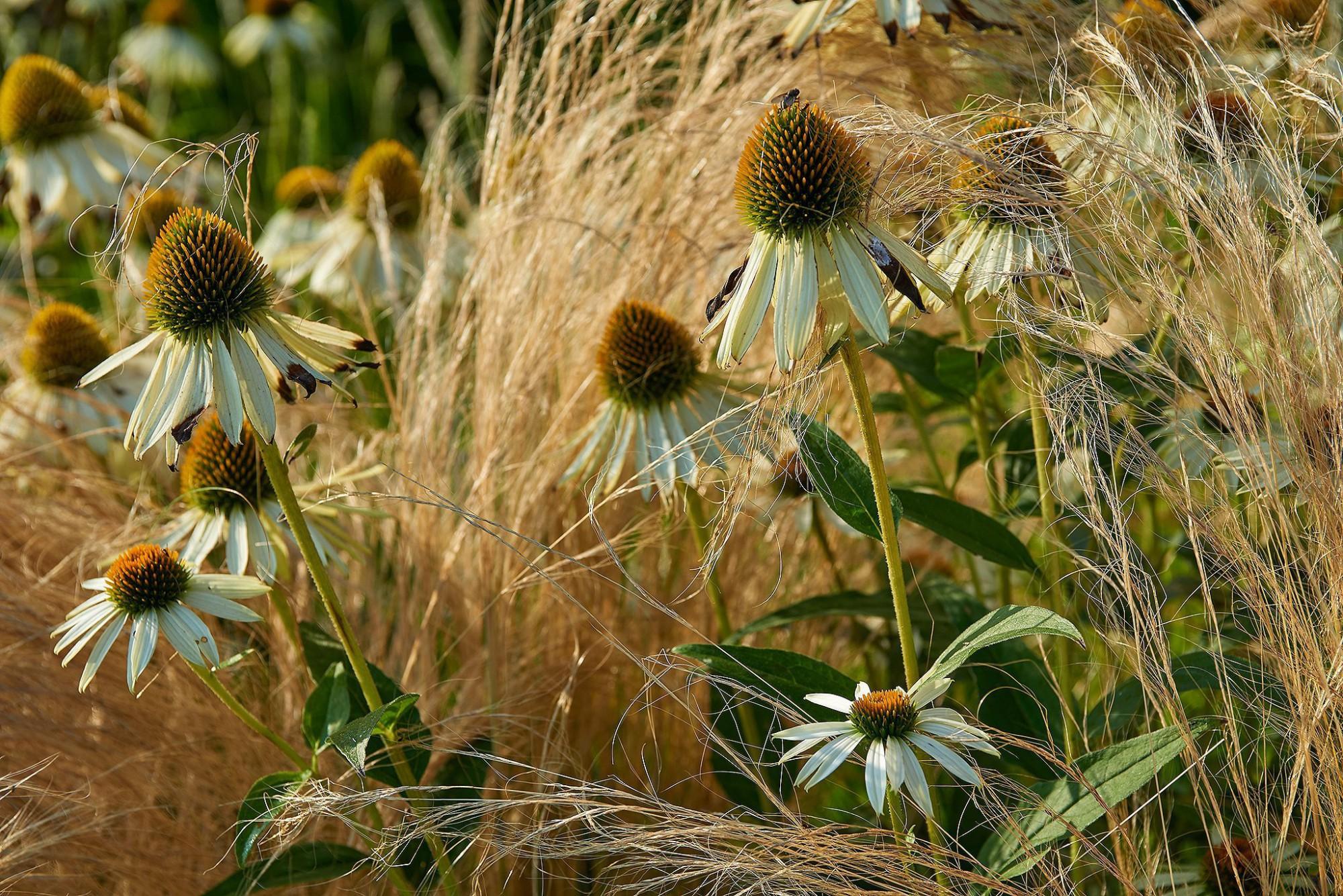 Afbeelding: Fotografie tuin te Wortel voor © Groenpunt, foto Van Huffel.