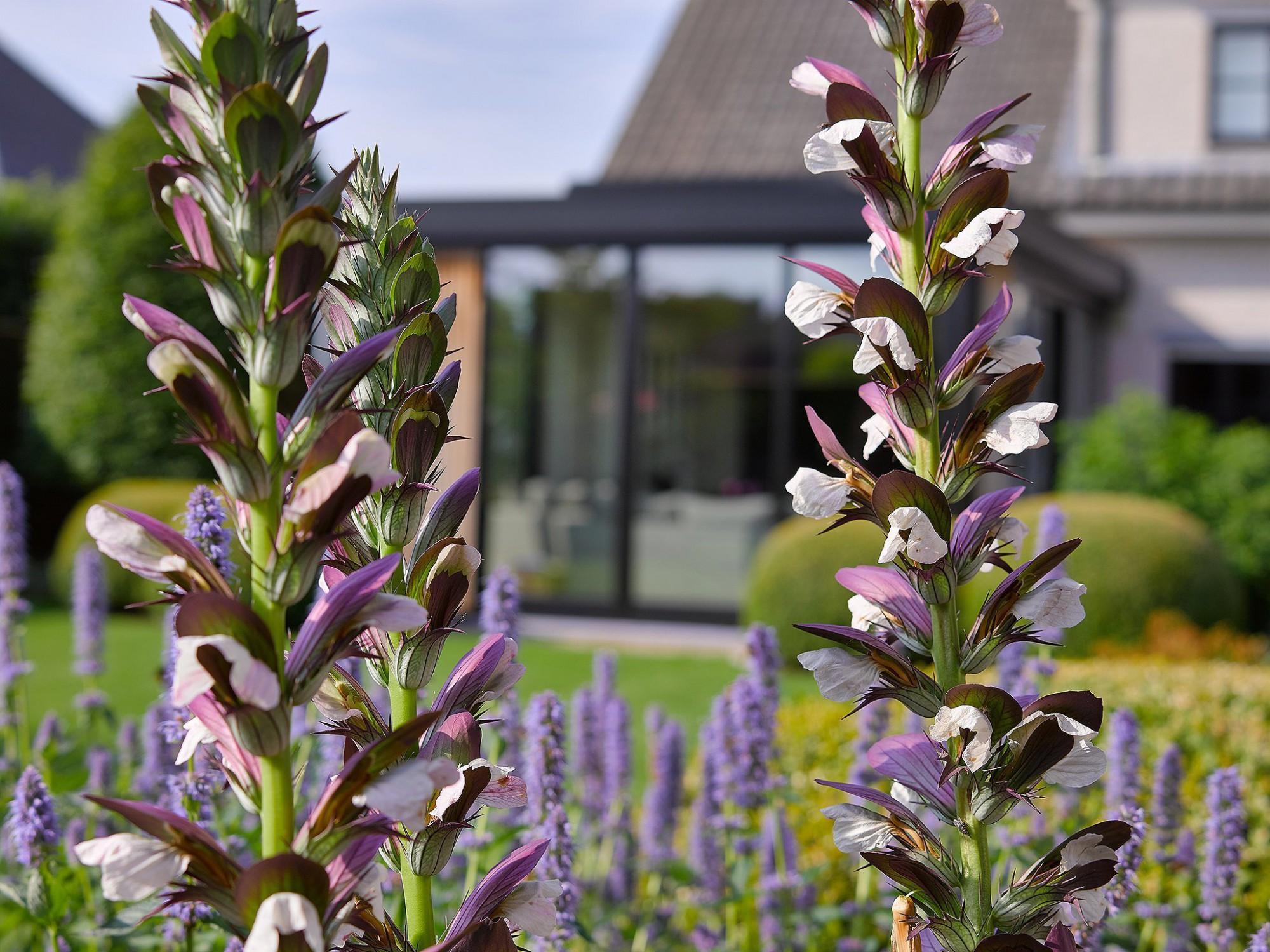 Afbeelding: Fotografie veranda te Itegem, sfeerschepping tuin en omgeving voor Aldera, foto Van Huffel.
