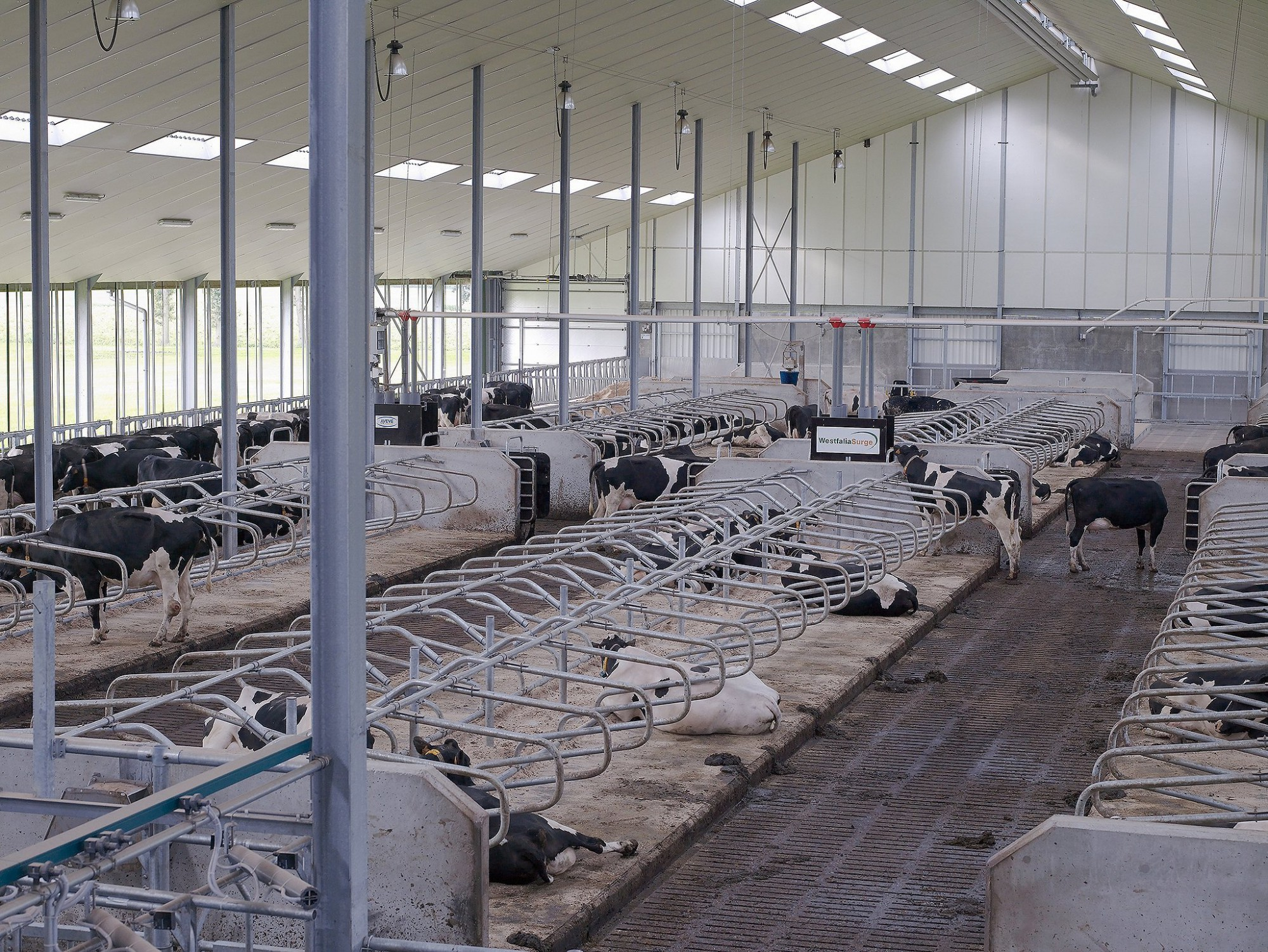 Afbeelding: Architectuur fotografie, stallenbouw voor melkkoeien, voor Michielsen Industriebouw.