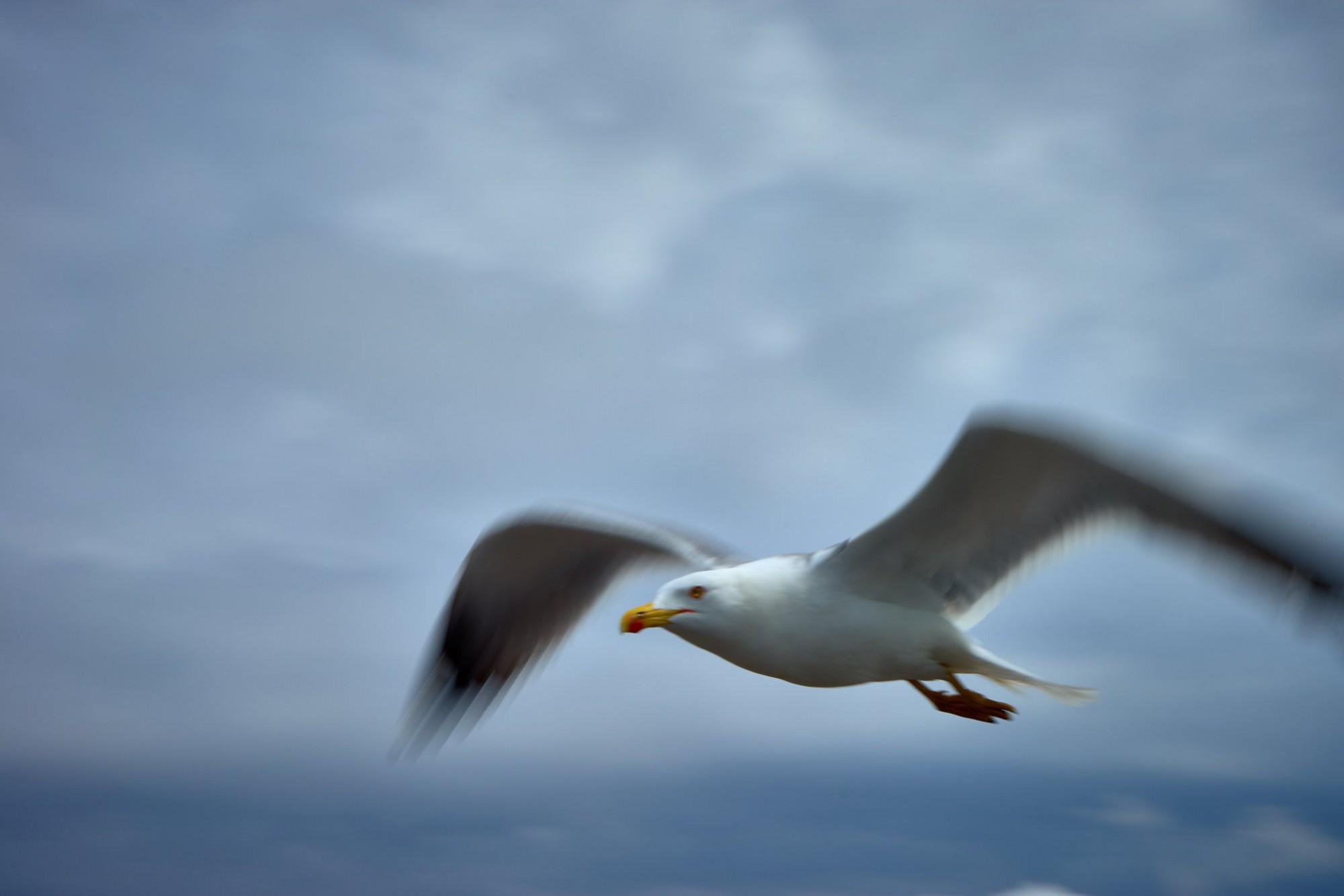 Afbeelding: Alles over fotografie… en over de kunst van vliegen, foto Van Huffel Hoogstraten.