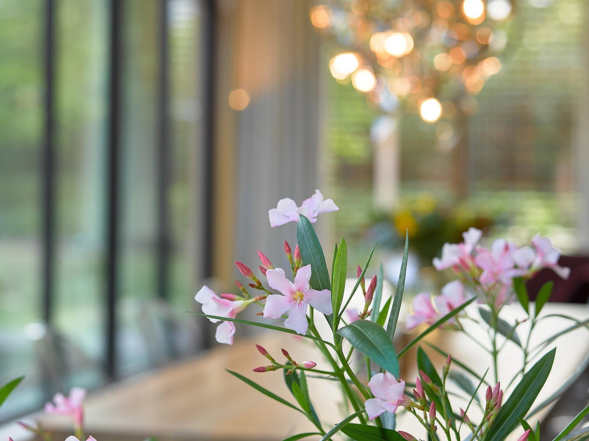 Afbeelding: Fotografie van tuinkamers, verandas, eiken bijgebouwen, poolhousen, …hedendaagse beleving.
