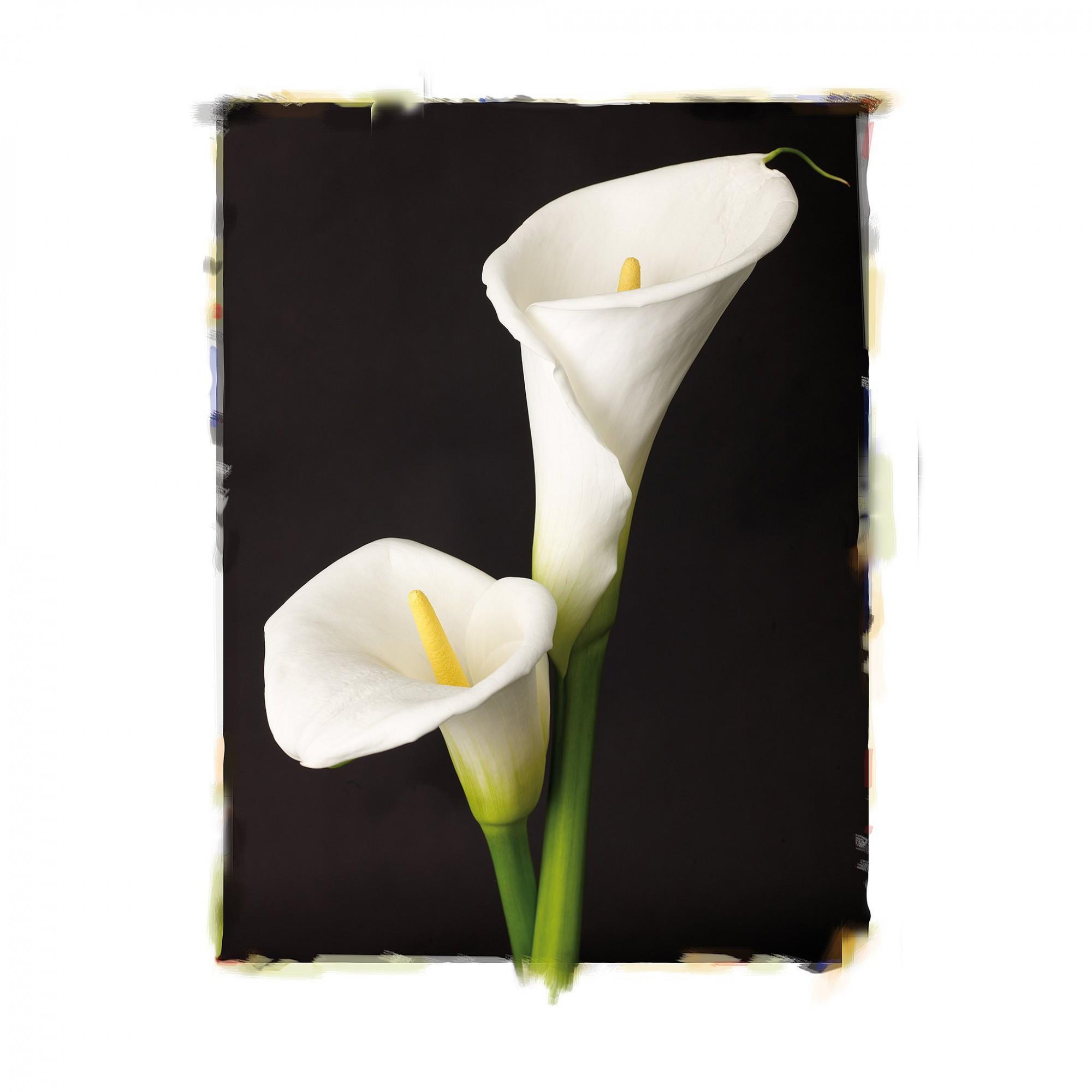 Afbeelding: Uitwerking bloemenreeks, lelies © fotovanhuffel.
