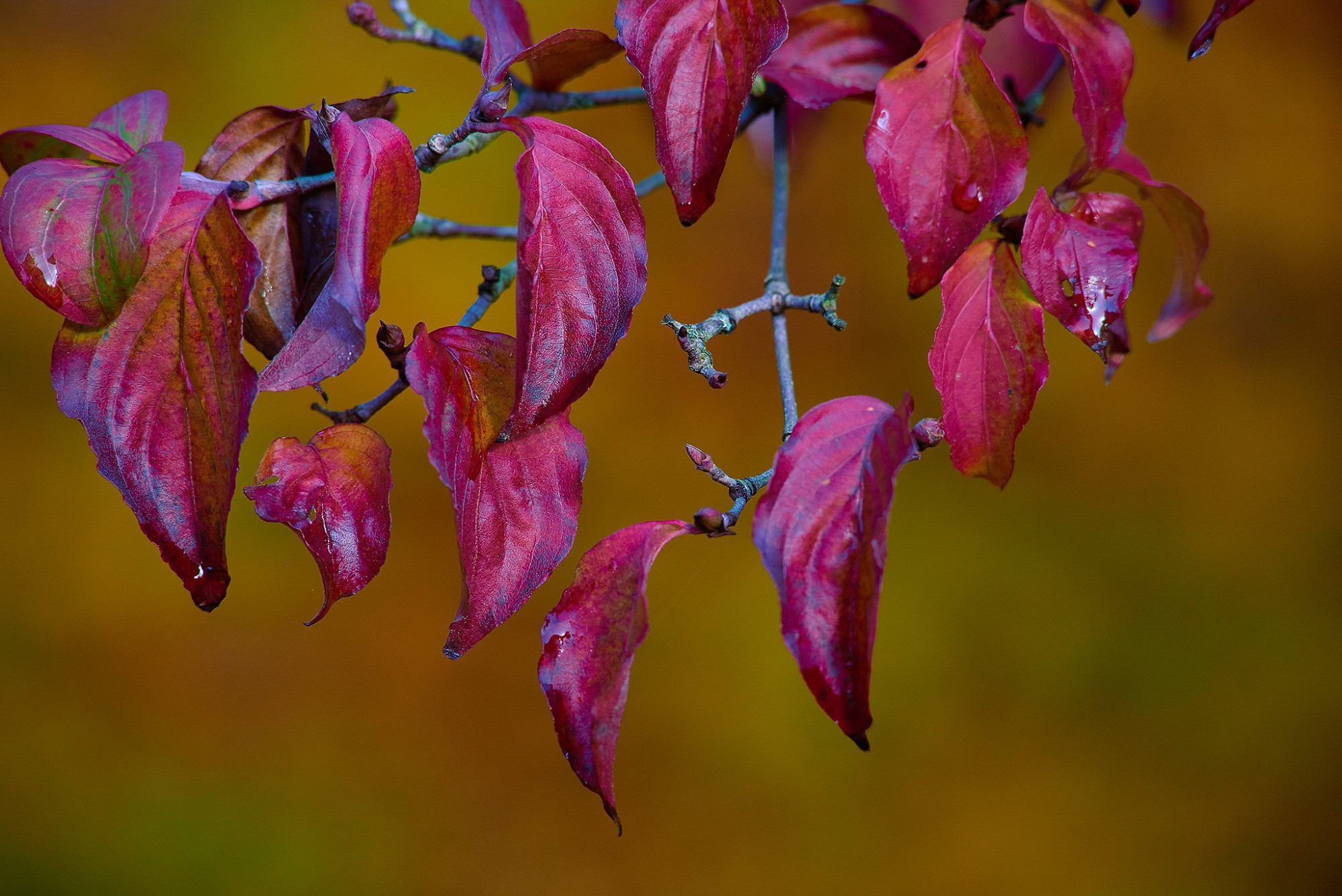Afbeelding: Fotografie tuin te Kapellen voor © Duo Verde.