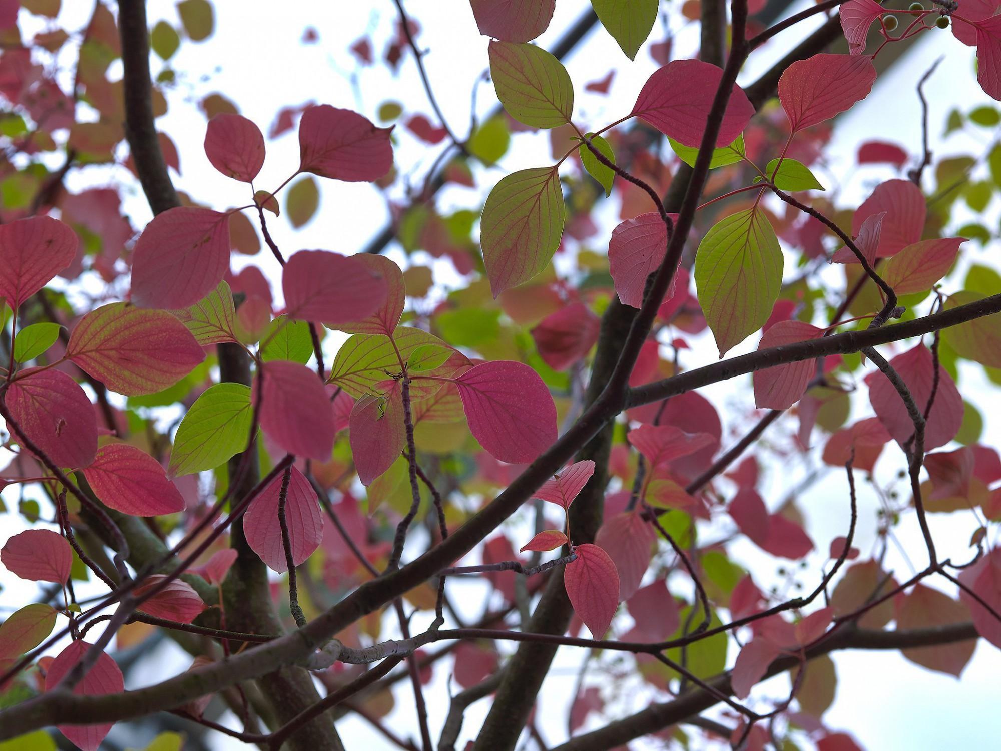 Afbeelding: Planten, struiken en bomen fotografie, foto Van Huffel.